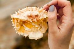 Armadura de um caranguejo do mar fotos de stock