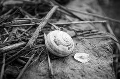 Armadura preto e branco Fotografia de Stock