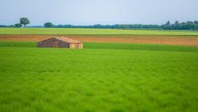 Armazém entre campos verdes da alfazema Foto de Stock