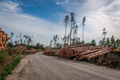 Armazenado no felling da árvore de floresta após um vendaval foto de stock