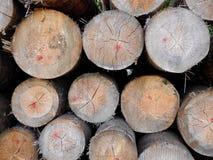 Armazenagem de madeira fotografia de stock