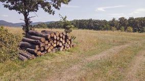 Armazenagem de madeira na floresta Fotos de Stock Royalty Free