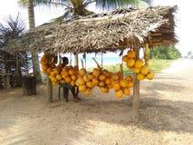 armazenista doce do rei-coco de Sri Lanka foto de stock