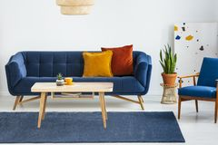 Armchair next to blue sofa with cushions and wooden table in flat interior with plant. Real photo. Concept royalty free stock photo