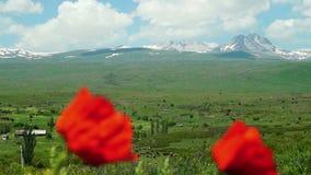Armeński halny Aragats z zamazanym maczkiem kwitnie w przedpolu zbiory