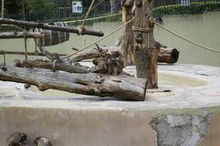 Arme Affen in einem Zoo lizenzfreies stockbild