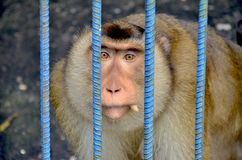 Arme Affen werden in den Käfigen am Zoo eingeschlossen lizenzfreie stockfotos