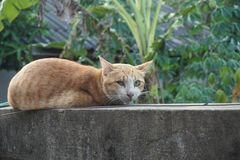 Arme blinde Katze Stockfotografie