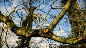 Arme eines blattlosen Baums Stockbild