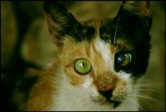 Arme Katze Lizenzfreies Stockfoto