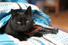 Armed cat Stock Images