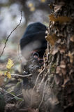 Armed forces. Special forces patrol in woods Royalty Free Stock Photography