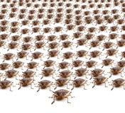 Armee der Brown-Gestank-Programmfehler Lizenzfreie Stockfotografie