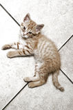 Armen weinig kat stock foto's