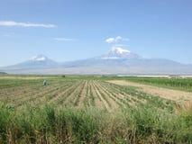Armenia, Ararat, Ararat valley. And fields Royalty Free Stock Images