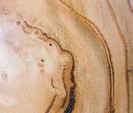 armeniaca de prunus, fond de texture en bois d'abricot dans la macro pousse de lentille photo libre de droits