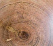 armeniaca de prunus, fond de texture en bois d'abricot dans la macro pousse de lentille photo stock