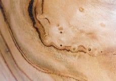 armeniaca de prunus, fond de texture en bois d'abricot dans la macro pousse de lentille photos stock
