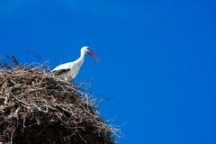 Armenian Crane Bird Stock Images