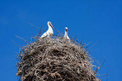 Armenian Cranes Pair Royalty Free Stock Photos