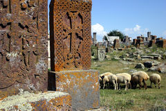Armenian graveyard with sheep. Armenian graveyard with khachkars and sheep Royalty Free Stock Images