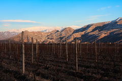 Armenian Vineyards Royalty Free Stock Images