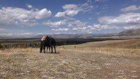 Armenien, Autumn Colors in Aragazotn-Provinz stockfotografie