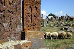 Armenischer Friedhof mit Schafen Lizenzfreie Stockbilder