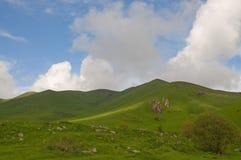 Armeniska berg i fjädern Arkivbild