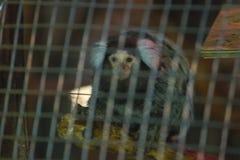 armer Affe in einem Käfig Stockbilder
