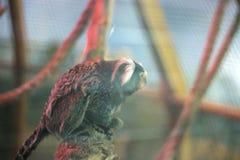 armer Affe in einem Käfig Stockfoto
