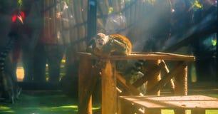 armer Affe in einem Käfig Lizenzfreies Stockbild