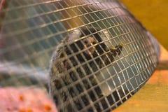 armer Affe in einem Käfig Stockfotografie