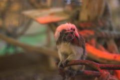 armer Affe in einem Käfig Stockfotos