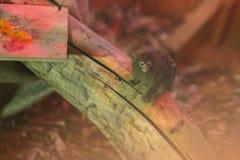 armer Affe in einem Käfig Lizenzfreies Stockfoto