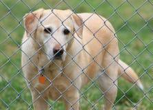 Armer Hund Lizenzfreies Stockbild