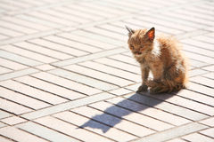 Armes Kätzchen Lizenzfreie Stockfotos