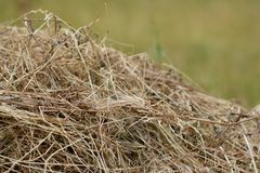 Armful of dry grass, hay Royalty Free Stock Images