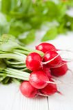Armful of fresh red radish with leaves Royalty Free Stock Image