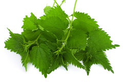 Armful of a green nettle Stock Photos