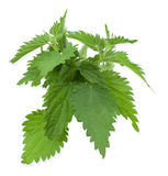 Armful of a green nettle. On white a background royalty free stock image