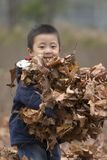 Armful leaves. A late autumn day playing at park Royalty Free Stock Photo
