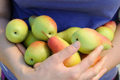 Armful of pears Stock Photography