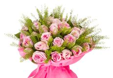 Armful of pink roses. isolated image on white. Background Stock Photography