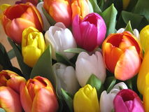 An armful of tulips Stock Photo
