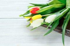 Armful of tulips on tray Stock Photo