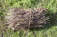 Armful of twigs on grass Royalty Free Stock Images