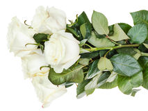 Armful of white roses isolated Stock Photos