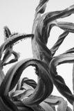 Armi in bianco e nero dell'albero dei candelabri fotografie stock libere da diritti