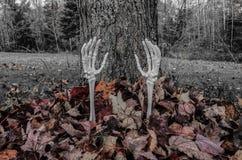 Armi dello scheletro che raggiungono fuori dalle foglie di caduta Immagine Stock